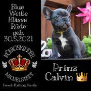 2 bezaubernde Französische Bulldoggen Welpen