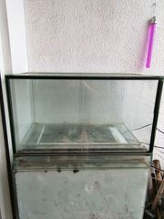 Terrarium für Pfeilgiftfrösche zu verkaufen