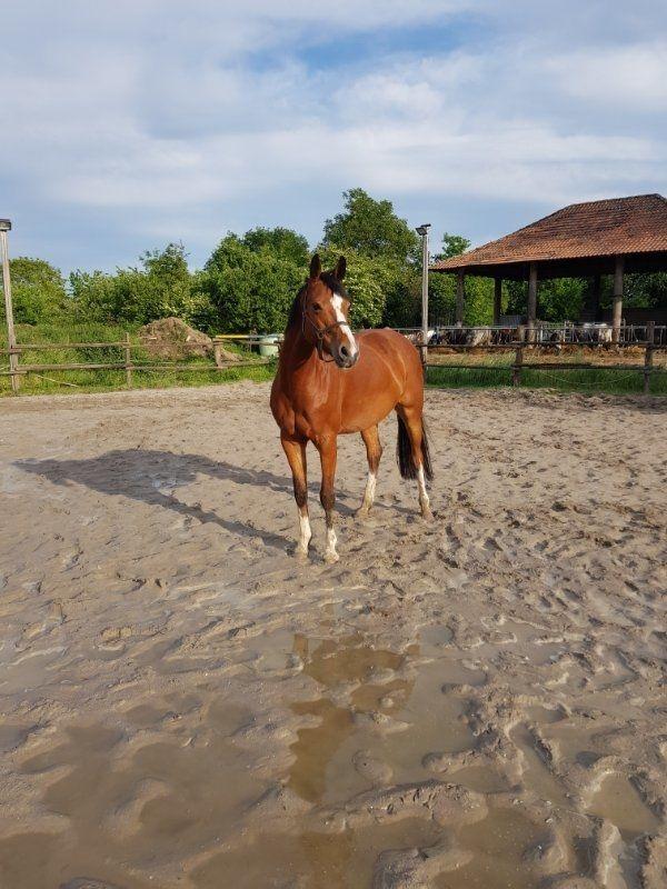 Reitbeteiligung Pferd sucht Reiterin