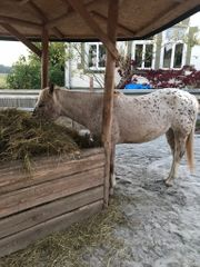 Pferdeboxen Stellplätze Günstige Angebote Quokade