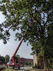 Baumpflege mit Steiger Hebebühne zur