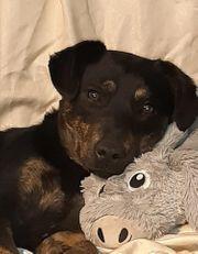 Wenja - liebevoller Hundejunge sucht seine