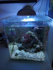Meerwasser Nano Auquarium