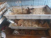 3 Kaninchen mit Käfig