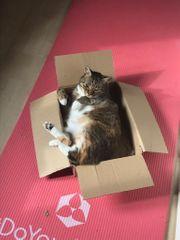 VERBENA - sehr schüchternes Katzenmädchen