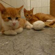 9 Kitten schmusig katzenkinder verspielt