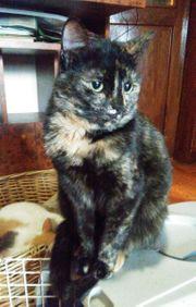 Süßes Kätzchen Lori sucht ihr