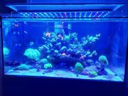 Meerwasseraquarium nür komplett mit alles