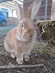 Kaninchen Beratung