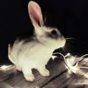 Kaninchenpaar sucht neues Zuhause