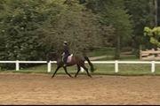 Reitbeteiligung Reiter such Pferd
