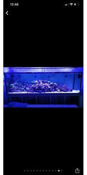 LED Meerwasser Beleuchtung Lampe DIY