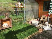Katzenpension mit Freigehege in Sinsheim-Waldangelloch