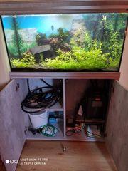 Neuwertiges Aquarium 200 Liter komplett