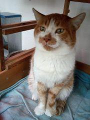 Whiskers sucht sein Zuhause