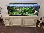 Aquarium komplett mit Besatz 350l