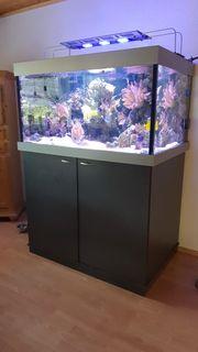 Meerwasser Aquarium komlett mit allem