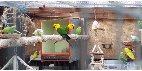 Altersruhesitz für vögel