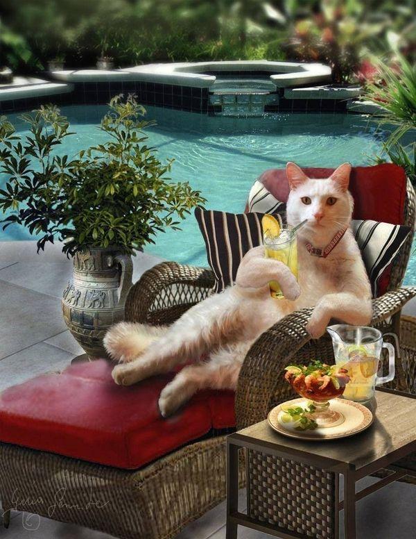 Katzensitter private liebevolle Betreuung über