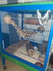 Zu verkaufen Käfig mit Zubehör