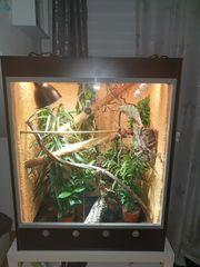 Terrarium hochterrarium lucky reptile