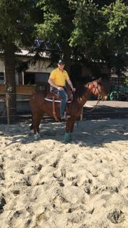 4 Jährige Quarter Horse Stute