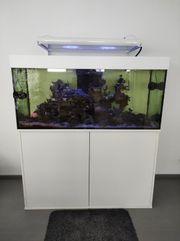 Meerwasser Aquarium Weißglas 130x55x50 und