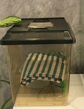 Reptilien, Terraristik - Terrarium mit 2 Schlangen