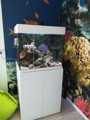 200l Meerwasseraquarium