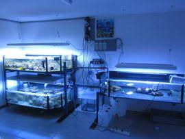 Osmosewasser für Meerwassaquarium Aquarium Salzwasser: Kleinanzeigen aus Backnang - Rubrik Fische, Aquaristik