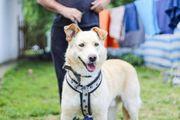 Herzenshund Finn sucht seine Menschen
