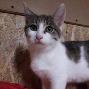 Süßes Kätzchen Mia ist bereit