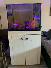 300l Aquarium mit Unterschrank