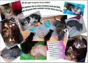 Spenden gesucht für Katzen Auffangstation