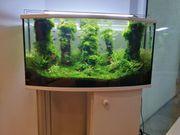 Pflegeleichtes Aquarium Aquascape mit Fischen