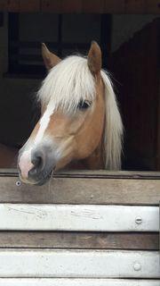 - wer möchte ein Pferd in