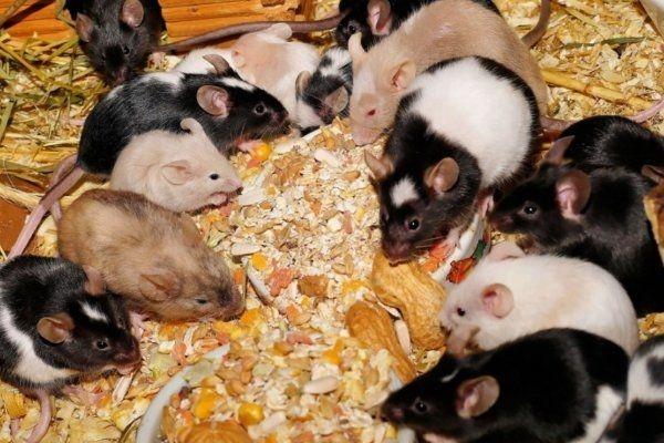 suche Mäuse