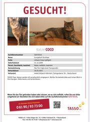 Katze Coco in Alsbach entlaufen