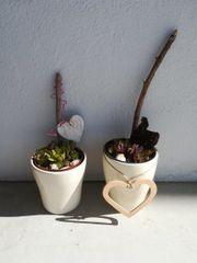 Keramiktöpfe mit Pflanzen winterhart