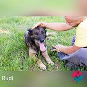 Rudi - Ist eher von der