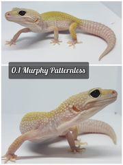 0 1 Leopardgecko Murphy Patternless