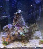 Korallen Konvolut Set versch Arten