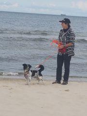 Kleiner Hund Frauchen suchen tierlieben