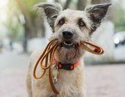 Biete kostenloses Hundesitting Gassigehen mit