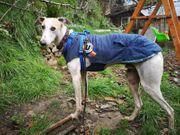 Hundebub Dobby sucht verständnisvolles Zuhause