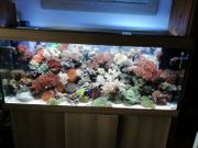 Aquarium Salzwasser komplett 450l