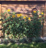 Paddockbox in Lorsch