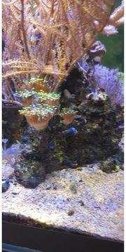 Diverse Korallen und Fische
