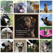 Mobile Hundebetreuung Gassi- Service Hundetraining