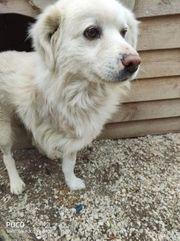 Handicap Hund Charis sucht sein